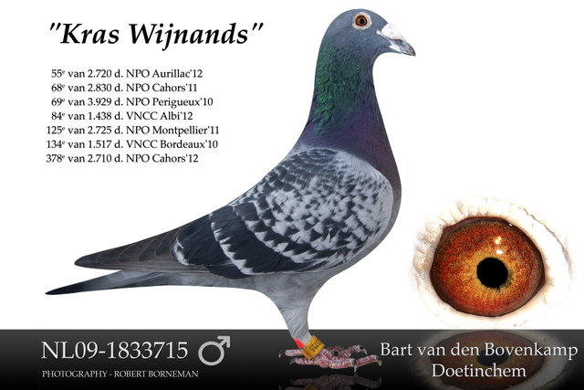 """Kras Wijnands"""