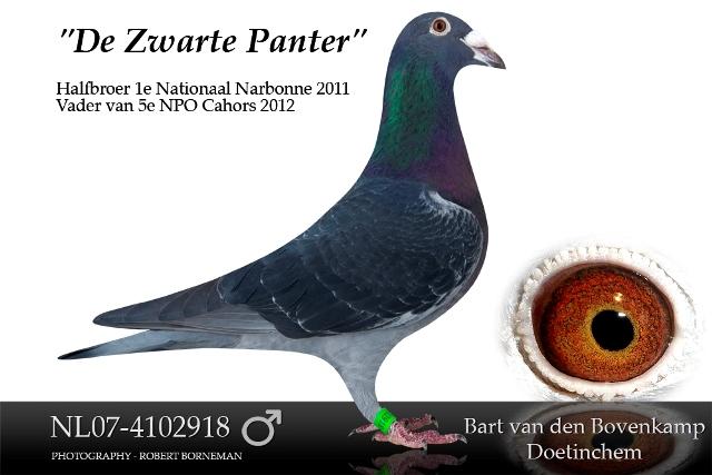 """De """"Zwarte Panter"""""""